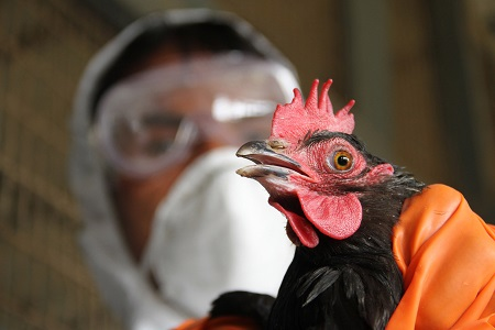 bird flu entrance in kerala after delhi and mp