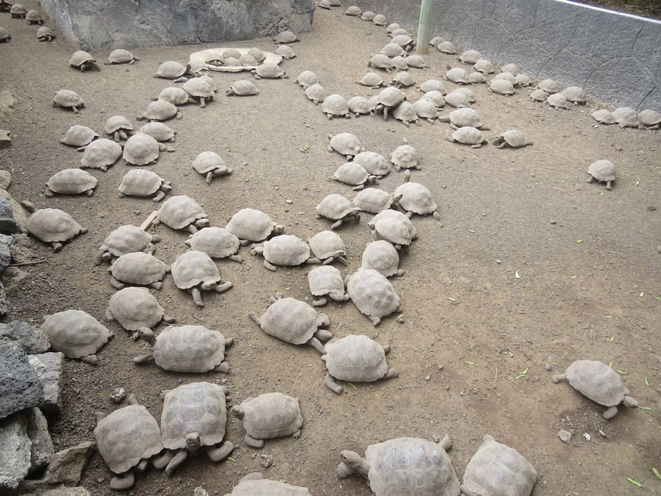 up-stf-amethi-police-arrested-tortoise-smuggler-10-thousand-turtle-recovered